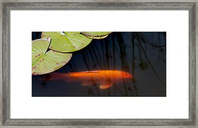 Koi And Lily Pads Framed Print