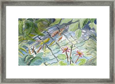 Koi Carp And Waterlilies. Framed Print