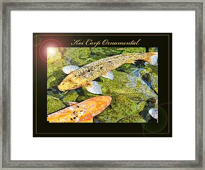 Koi Carp Goldfish Ornamental Framing Print Framed Print