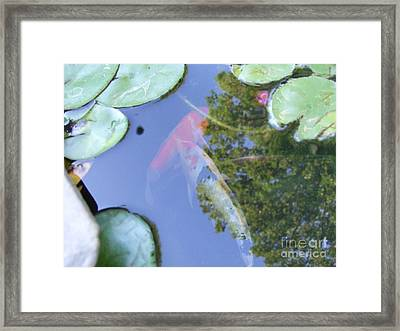 Koi Framed Print by Deborah DeLaBarre