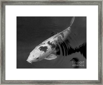 Koi In Black And White Framed Print by Mary Deal