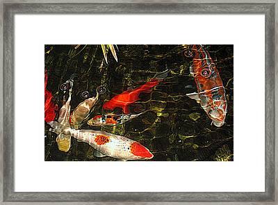 Koi Joy Framed Print by Suzy Piatt