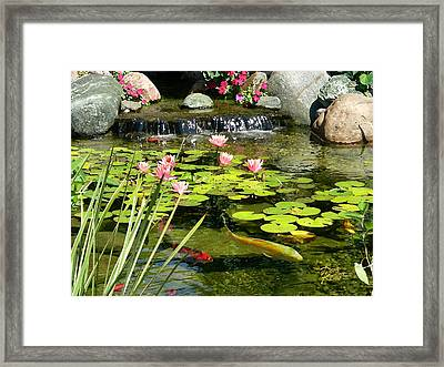 Koi Pond Framed Print by Doug Kreuger