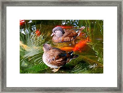 Koi Pond Ducks Framed Print