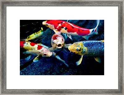 Framed Print featuring the photograph Koi Quartet by Joseph Hollingsworth