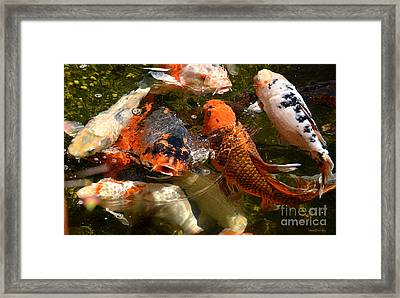 Koi Rising Framed Print by Susan Wiedmann