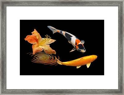 Koi With Azalea Ripples Framed Print