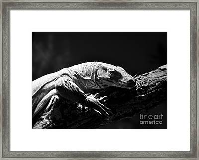 Framed Print featuring the photograph Komodo Dragon by Lisa L Silva