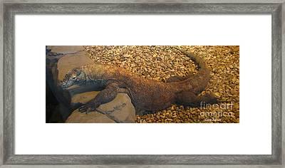 Komodo Framed Print by Greg Patzer