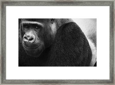 Kong Framed Print by Doug Comeau