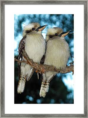 Kooka Duet Framed Print