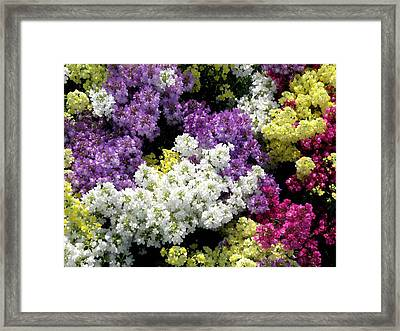 Many Colors Make A Beautiful Garden Framed Print by Jean Hall