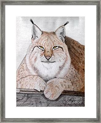 Koschka Framed Print by Becca Miller