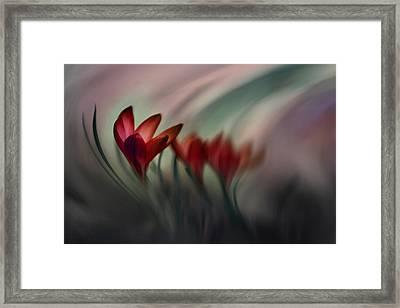 Krokus Framed Print