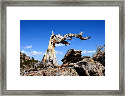 Krumholz At Timberline Framed Print