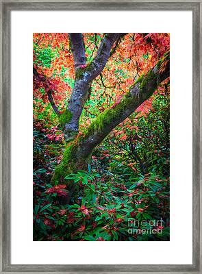 Kubota Gardens Foliage Framed Print by Inge Johnsson