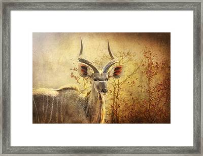 Kudo In The Wild Framed Print by Kim Andelkovic