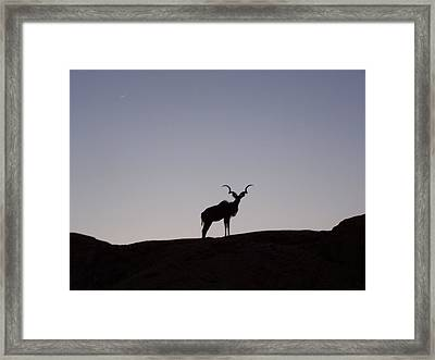 Kudu Silhouette At Nightfall Framed Print by Noreen HaCohen