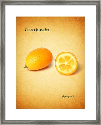 Kumquat Framed Print by Mark Rogan