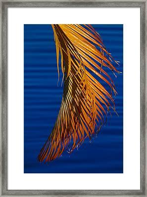 Kundalini Framed Print