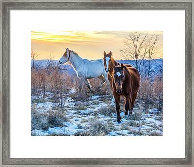 Ky Wild Horses Framed Print