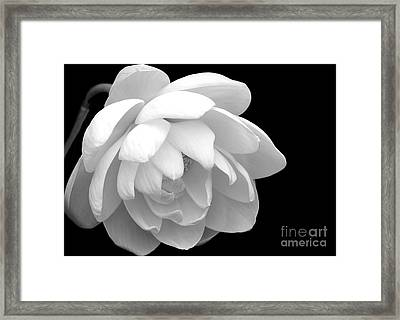 L Is For Lotus Framed Print by Sabrina L Ryan