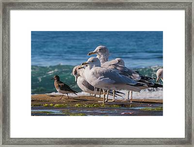 La Jolla Birds Framed Print