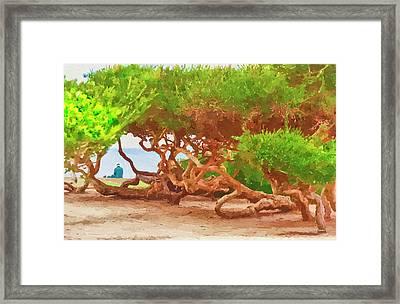 La Jolla California Framed Print by Angela A Stanton