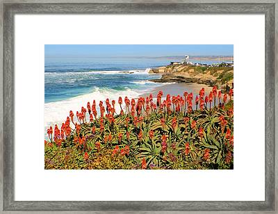 La Jolla Coast With Flowers Blooming Framed Print