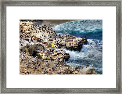 La Jolla Cove Wildlife Framed Print