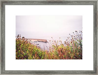 La Jolla Flowers And Seawall Framed Print