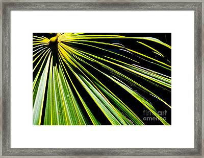 La Palma Framed Print by Jim Rossol