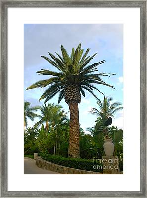 La Palmilla Framed Print by M West