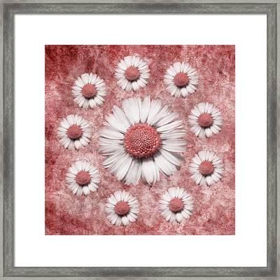 La Ronde Des Marguerites - Pink 02 Framed Print