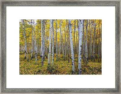 La Sal Aspen Framed Print by Mark Kiver