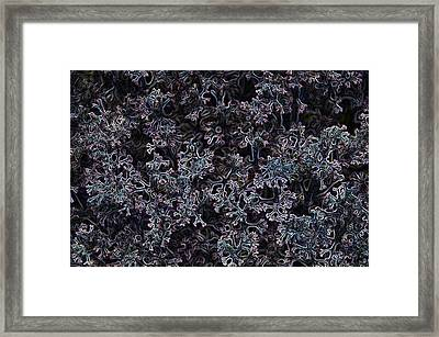 La Vida Alveoli Framed Print