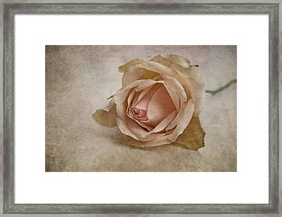 la vie en rose II Framed Print by Claudia Moeckel