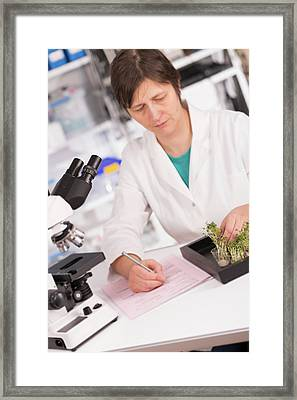 Lab Assistant Doing Paperwork Framed Print