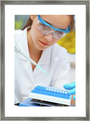 Lab Assistant Using A Pipette Framed Print
