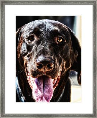 Lab Framed Print by Bill Cannon