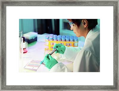Lab Technician Holding Test Tube Framed Print
