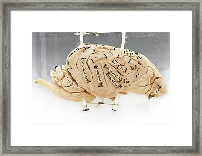 Labelled Dog's Brain Framed Print by Ucl, Grant Museum Of Zoology