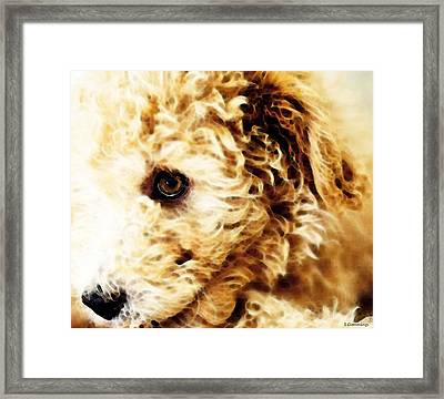 Labradoodle Dog Art - Sharon Cummings Framed Print
