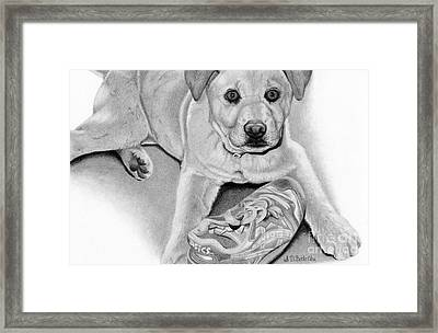 Sneaker Snatcher- Labrador And Chow Chowx Mix Framed Print by Sarah Batalka