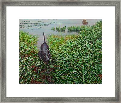 Labrador Framed Print by Kenneth Cobb