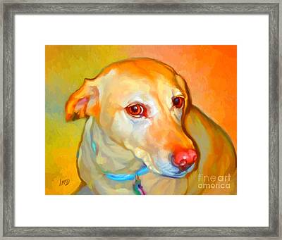 Labrador Painting Framed Print by Iain McDonald