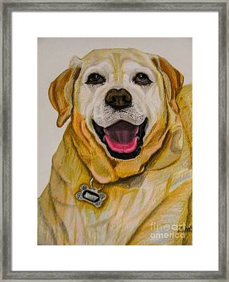 Labrador Retriever Drawing Framed Print