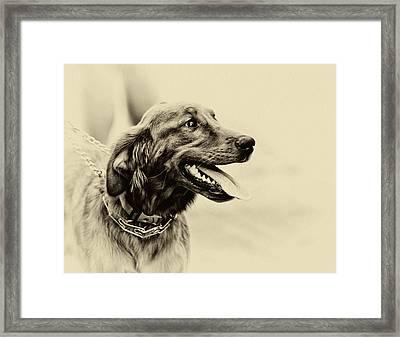 Labrador Retriever Framed Print by Jerome Lynch