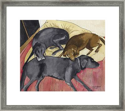 Labrador Retrievers Resting At Home Framed Print by Ethan Altshuler