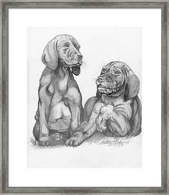 Labrador Retriver Puppies Framed Print